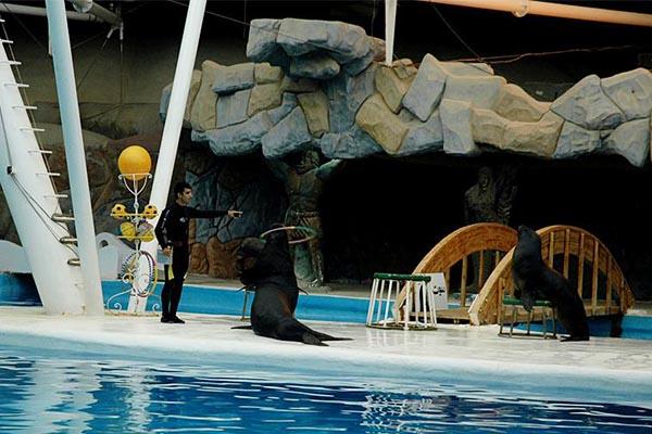 آکواریوم دلفین های کیش