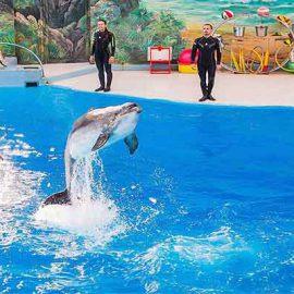 گشتی در پارک دلفین کیش