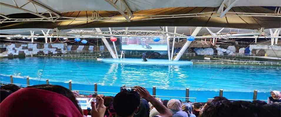 مجموعه پارک دلفین های کیش