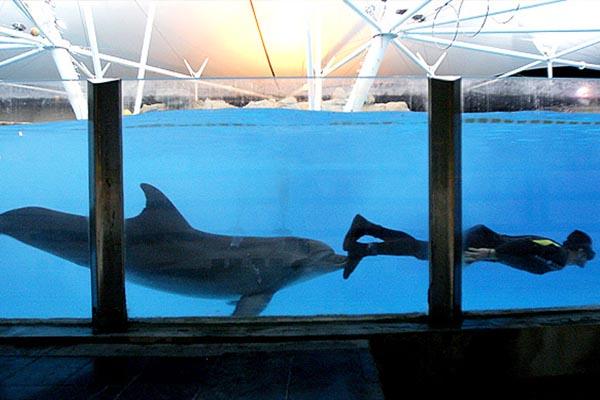 دلفین های جزیره کیش
