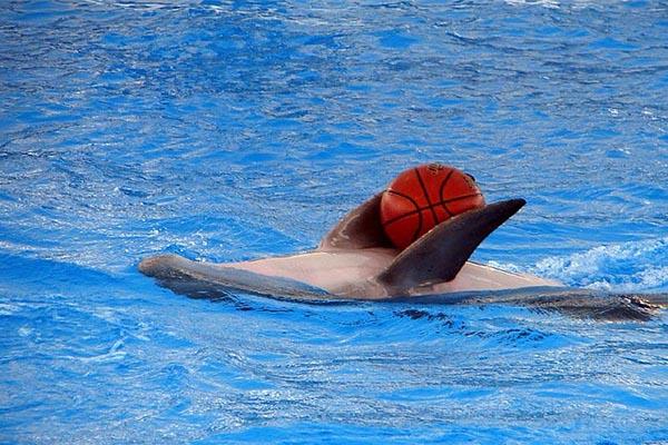 پارک دلفین های جزیره کیش