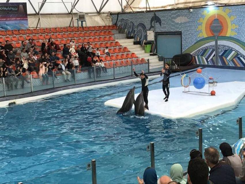 پارک آبی دلفین ها در کیش