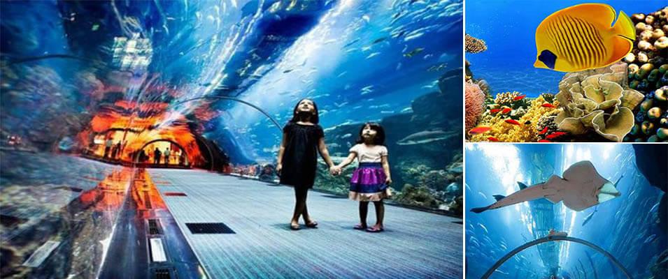 با آکواریوم کیش دنیای زیر دریا را از نزدیک ببینید