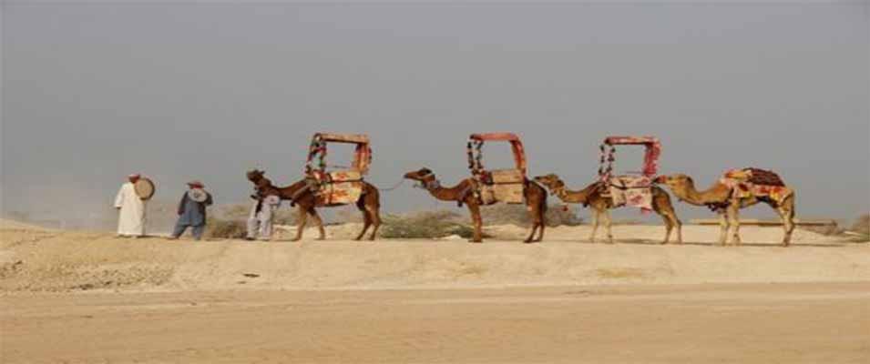 شتر سواری کیش یک تجربه بی نظیر